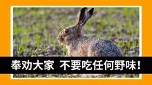 吃烤野兔當心染上鼠疫