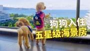 带狗狗入住五星级海景房